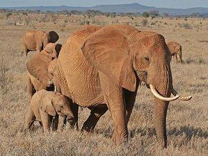 4 Days Road Safari in Tsavo East, Tsavo West, and Amboseli, Kenya