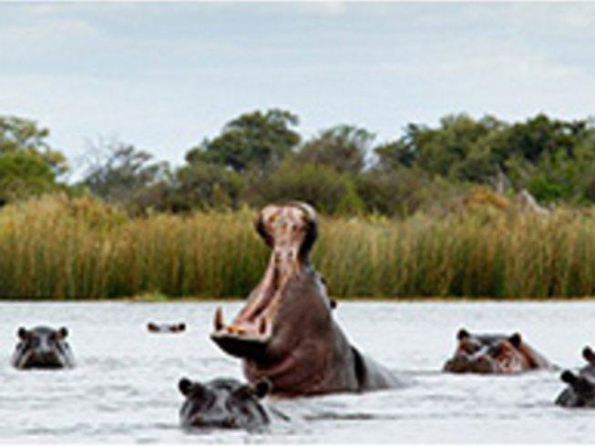 3 Days Mokoro Botswana Safari