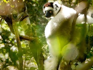 9 Days Baobab and Lemur Luxury Tour and Safari in Madagascar