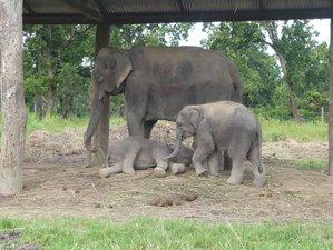 6 Day Wildlife Tour in Chitwan Jungle, Kathmandu