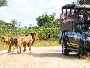 3 Days Tremisana Lodge Safari in Kruger National Park, South Africa