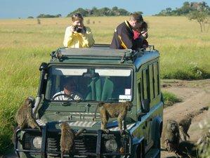 4 Days Thrilling Safari at the Masai Mara National Reserve and Lake Nakuru National Park in Kenya