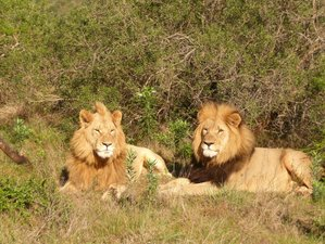 8 Days Best of Caprivi Strip Safari in Namibia