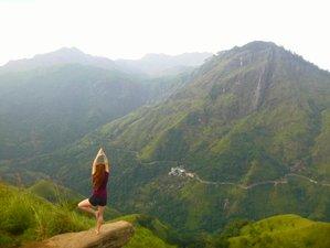 10 Day Wildcrafted Fairtrade Wellness Retreat with Yoga and Surf in Hiriketiya