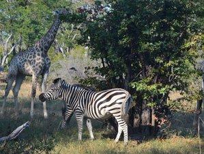 11 Days Unforgettable Safari in Zimbabwe and Botswana