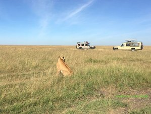 3 Days Luxury Safari in Maasai Mara National Reserve, Kenya