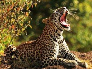 4 Days Wildlife Tour in Wayanad, India