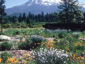 7 Day Reconnect and Re-Create Your Life with Mount Shasta Spiritual Adventure Retreat in California