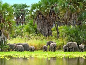 7 Days Guided Safari Tour in Southern Tanzania