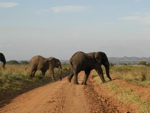 5 Days Photography Safari in Uganda