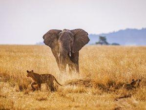 5 Days Tanzania Wildlife Safari   Lodge Safari