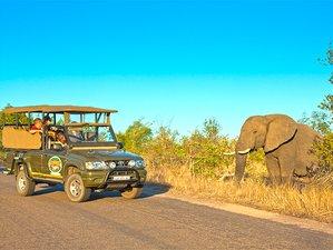 4-Daagse Onvergetelijke Betaalbare Safari in Kruger National Park, Zuid-Afrika