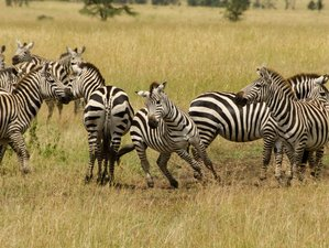 5 Days Thrilling Serengeti and Ngorongoro Crater Camping Safari in Tanzania