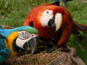 5 Day The Magic of Nativa Boat Trip, Nocturnal Walk, and Wildlife Tour in Iquitos, Loreto