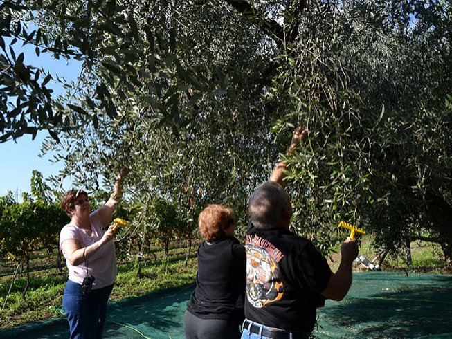 7 Days Wine, Olive Harvest, and Cooking Holidays in Abruzzo, Italy