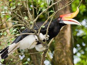 2 Day Sea Stack and Bako National Park Wildlife Tour in Sarawak, Malaysia