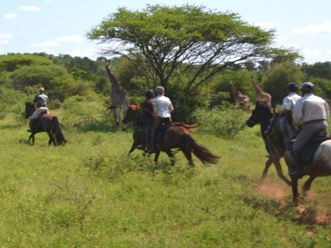 6 Days African Horseback Safari