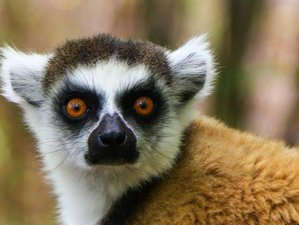 14 Days Wildlife Safari in Madagascar