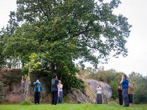 3 Day Wuji Qigong Intensive Meditation Retreat in Flaton, Sweden