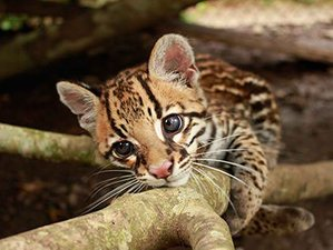 4 Day Holistic Wildlife Tour in the Amazon Jungle, Ecuador