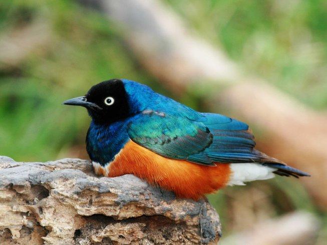 6 Days Bird Watching Safari in Serengeti National Park