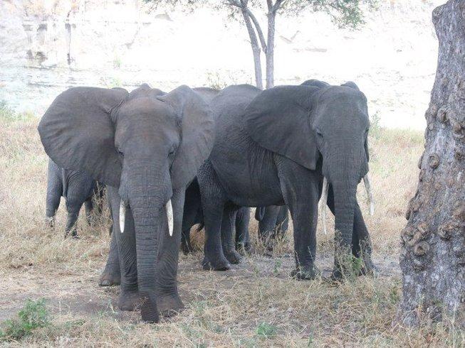 4 Days Tanzania Serengeti National Park Safari