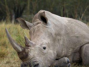 7 Days Exciting Wildlife Safari in Kenya