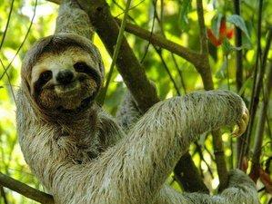 11 Day Luxury Wildlife Adventure Tour in Costa Rica