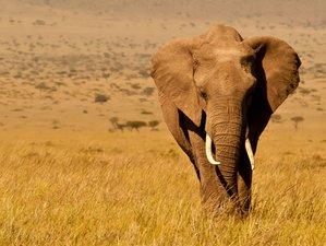 6 Days Unique Wildlife Safari in Kenya