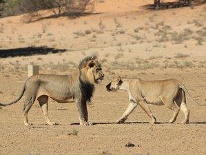 5 Days Big Five Safari Tour in Northern Tanzania