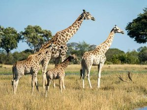 19 Days Intimate South African Safari