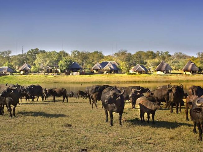 5 Days Kruger National Park Wildlife Safaris