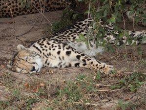 5 Day En-Suite Chalet Safari in the Kruger National Park, South Africa