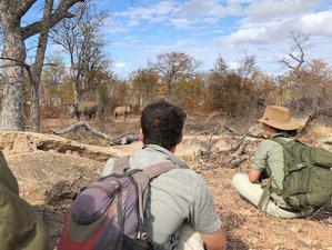10 Day Guided Walking Safari in Selati Game Reserve