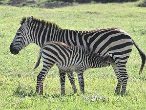 8 Days Ultimate Safari in Tanzania