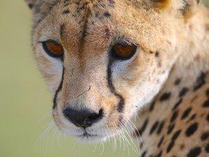 7 Days Fantastic Wildlife Safari in Tanzania