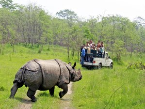 8 Day Kathmandu, Pokhara Valley, and Chitwan National Park Wildlife Tour in Nepal