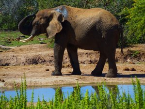 8 Day Addo National Park, Garden Route, Winelands, and Cape Town Safari in South Africa