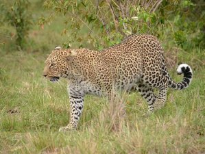 5 Days Highlights of Kenya Safari in Masai Mara with Boat Ride in Lake Naivasha