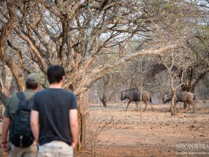 3 Days Exciting Safari in Kruger National Park, South Africa