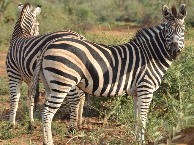 5 Days Tented and Lodge Kruger National Park Safari