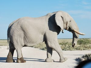 3 Days Etosha National Park Camping Safari in Namibia