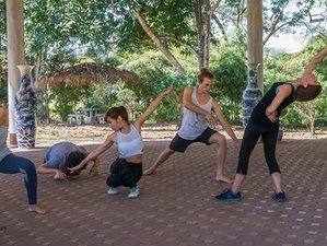13 Days Level 1 and 2 Dynamic 5 Animal Flow Medical Qigong Course in Chiang Mai, Thailand
