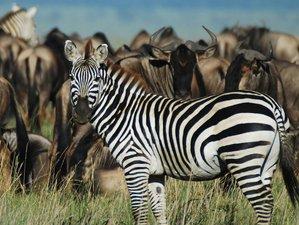 6 Days Standard Camping Game Safaris in Tanzania