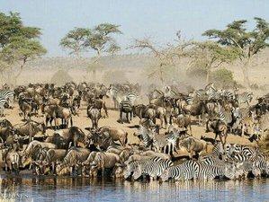 7 Days Mid-range Great Migration Safari in Manyara, Serengeti, and Ngorongoro, Tanzania