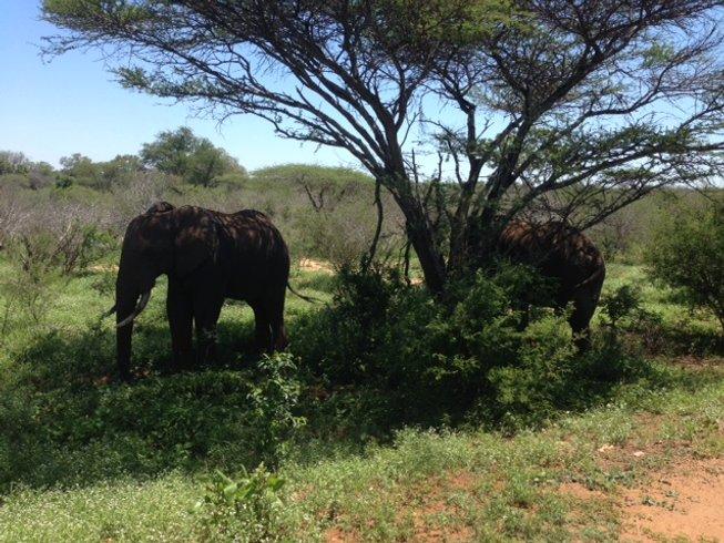 4 Days Safari in Kruger, South Africa