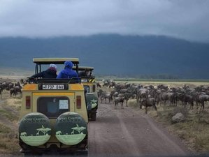 5 Days The Ultimate Wildlife Scenic Tour