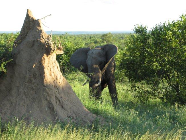 Top 10 Gorilla Trekkings Safari Holidays In Drakensberg