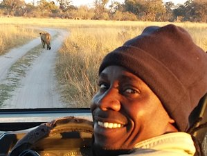 10 Day Green Season Mobile Camping Safari Tour in Botswana