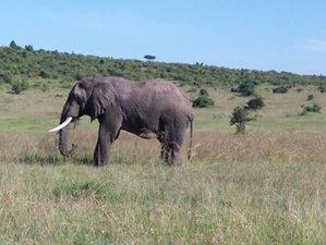 6 Days Best of Kenya Budget Safari in Masai Mara, Lake Nakuru, and Amboseli
